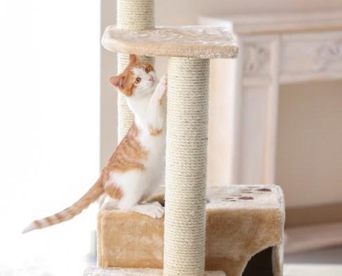 Tu gato necesita arañar y afilarse sus uñas