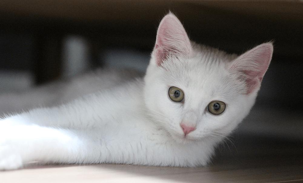 gusanos intestinales en los gatos