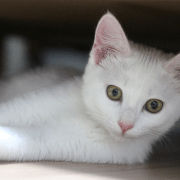 Las parasitosis internas en los gatos son un problema muy frecuente.