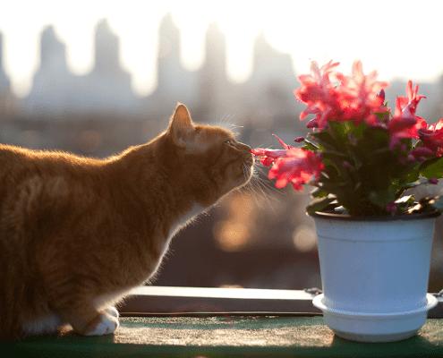 Plantas tóxicas para tu gato que puedes tener en casa