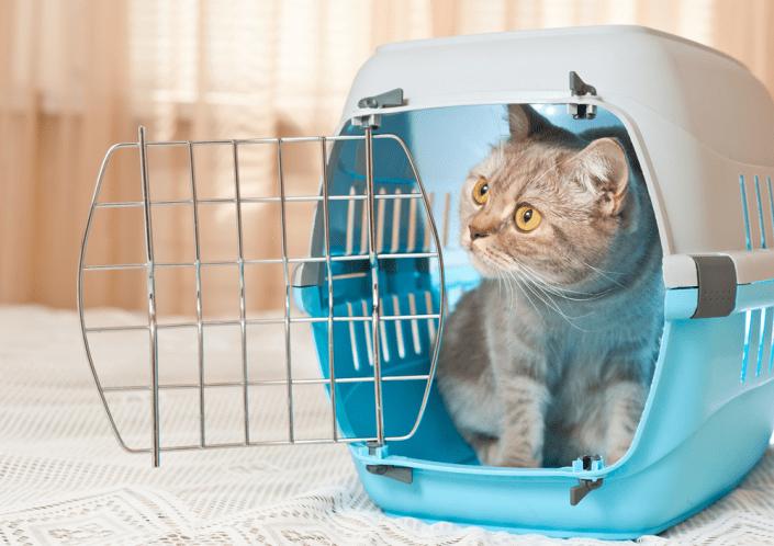 Cómo meter a un gato en el transportín para viajar con él estas vacaciones