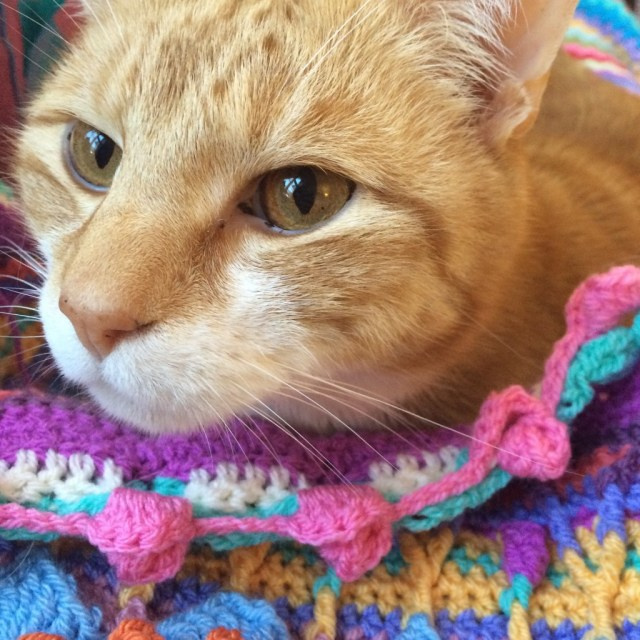 Cat helping me crochet Sophie's Universe blanket