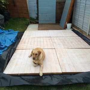 Labrador helping build an outbuilding