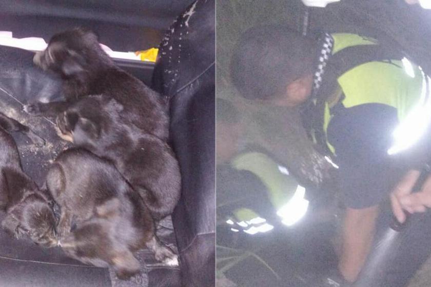 Policías de Concepción se metieron a un pozo en plena tormenta para rescatar a 11 cachorritos