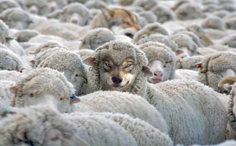 La piel de la oveja