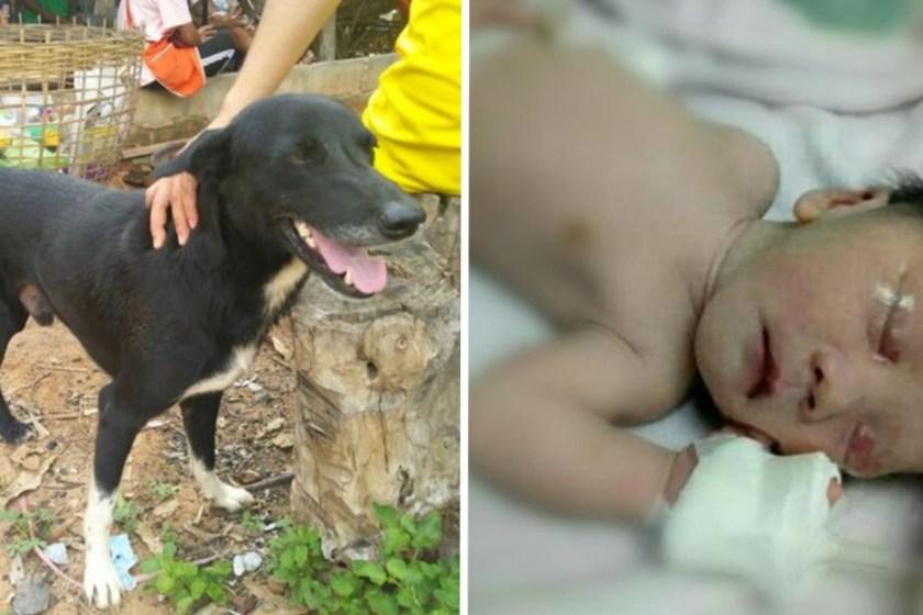 """"""" HEROE CANINO """": Un perro rescató a un bebé que fue enterrado vivo por su madre"""