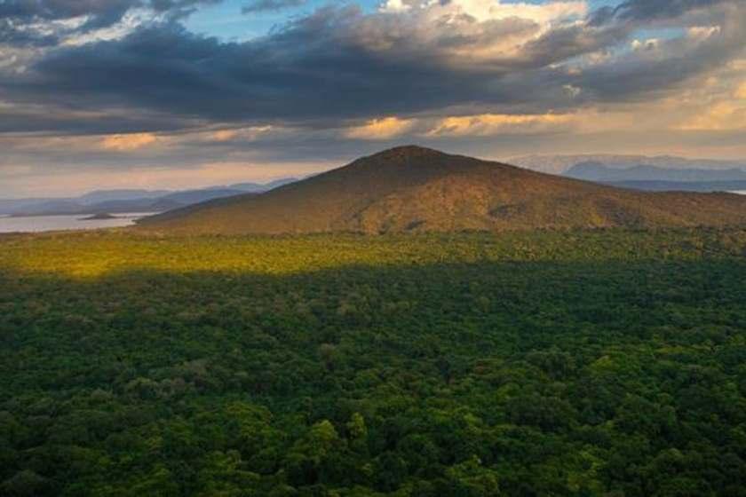 Etiopia logró el récord de plantar más de 350 millones de árboles en 12 horas