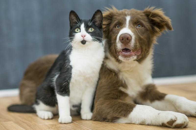 En  Salta inauguran  un hospital público para perros y gatos