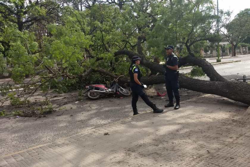 Cayó un arbol sobre un motociclista en el parque 9 de Julio