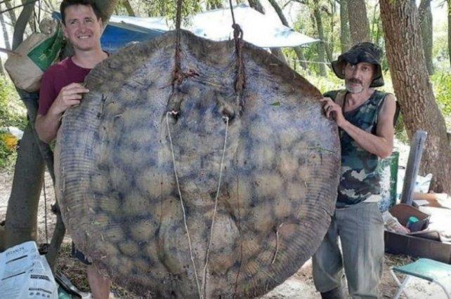 Una raya de mas de 150 kg fue capturada en el río Paraná