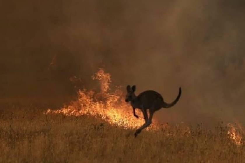 Australia: Los incendios avanzan sin poder ser controlados (VIDEOS)
