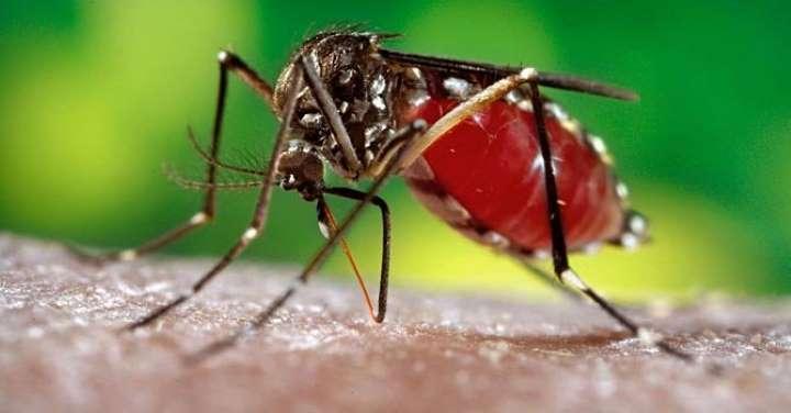 Dengue en Argentina: hay más de mil casos en 14 provincias y crece el nivel de alerta