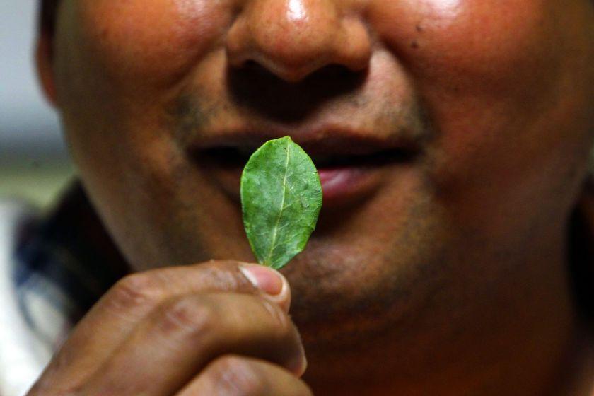 POLEMICO: Jujuy quiere repartir gratis las hojas de coca incautadas