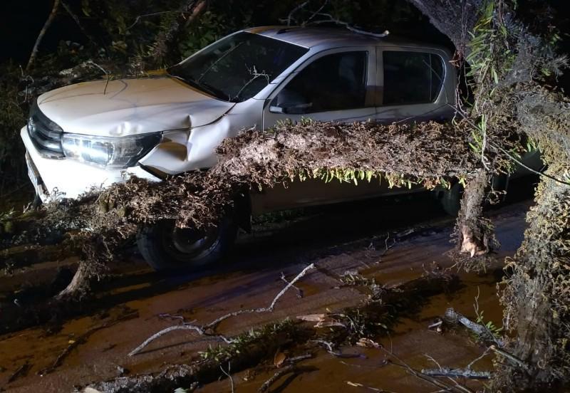 La tormenta derrumbo dos árboles y un poste de luz que cayeron sobre vehículos