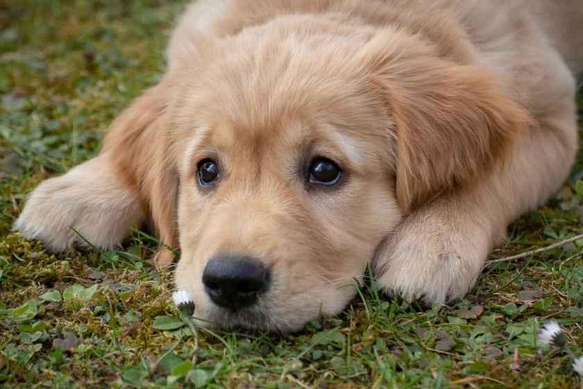 Los 25 alimentos para humanos que los perros nunca deberían comer