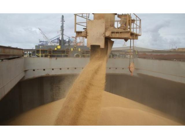 La Soja cotiza a USD 603 por tonelada y alivia las cuentas de la Argentina