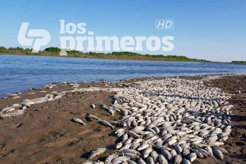 Encontraron miles de peces muertos en el río Salí