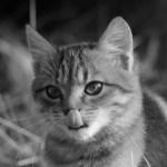Sueños con gatos