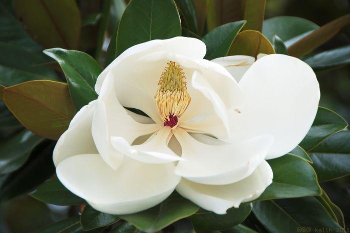 soñar con flor