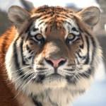 soñar con luchar con animales
