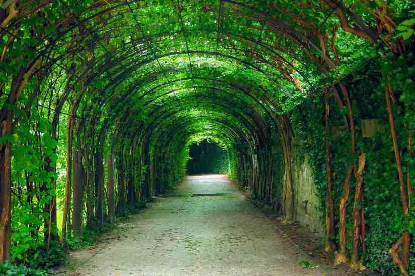 sueños con tuneles de plantas