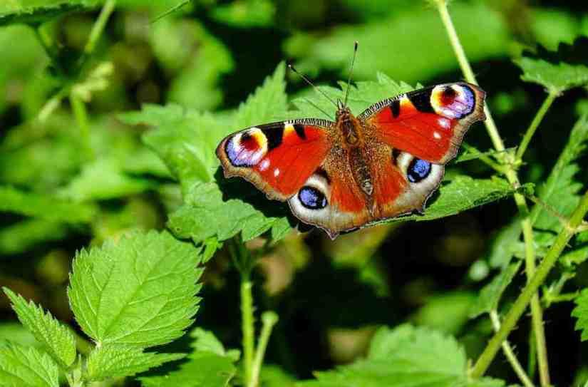significado de los sueños con mariposas de colores