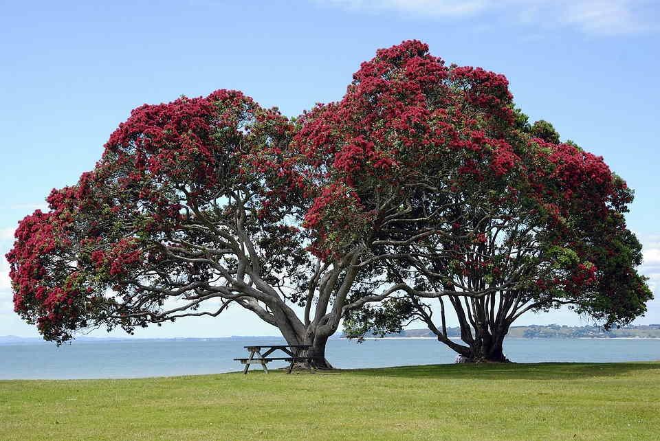 Soñar Con árboles La Guia De Los Sueños