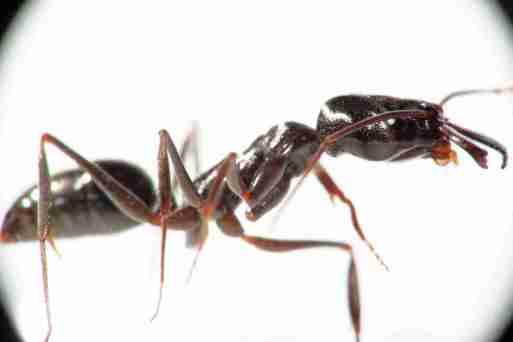 soñar con hormigas en la casa