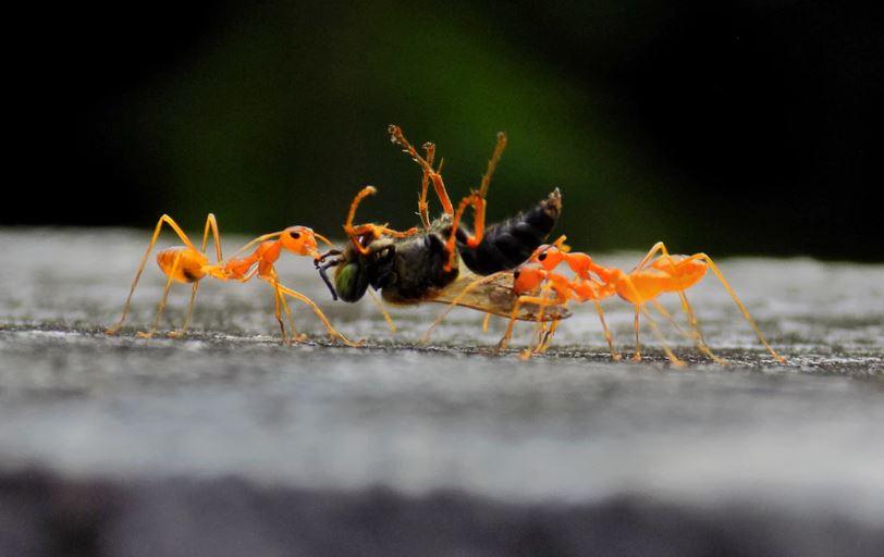 significado de soñar con hormigas