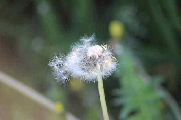 sueños con vientos suaves