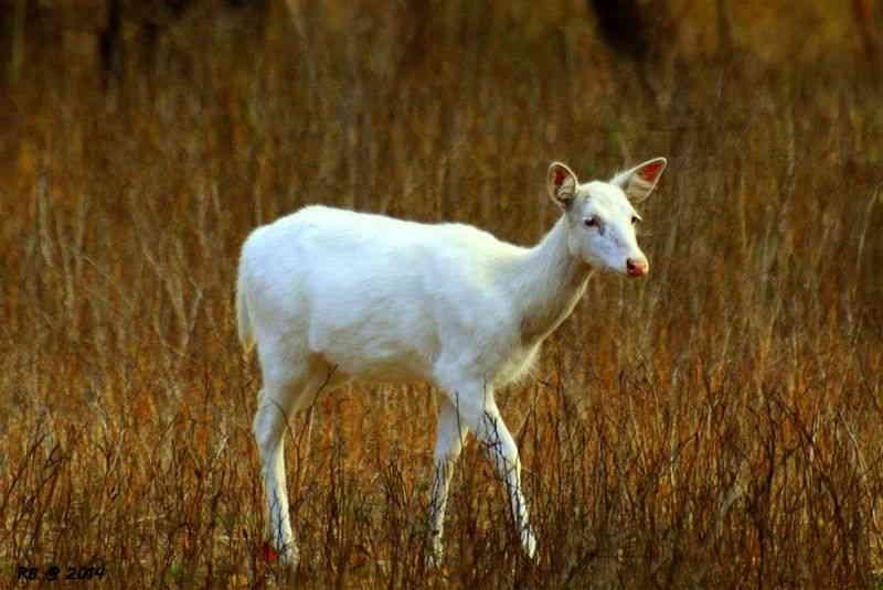 significado de soñar con animales blancos