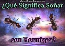 Qué Significa Soñar con Hormigas?