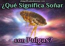 Qué Significa Soñar con Pulgas?