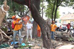 Brigadas podan arbol,parque Juan Antonio Alix