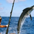 Anuncian torneo de pesca del Pez Vela dedicado a Tony Peña