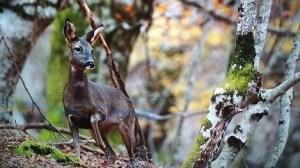 100 días de soledad y los ciervos