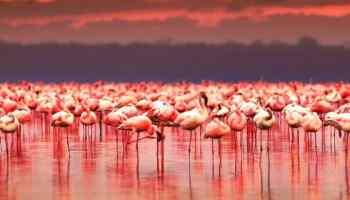 Ría Celestún, un paraíso rosa y rinconcito de Yucatán | El Souvenir
