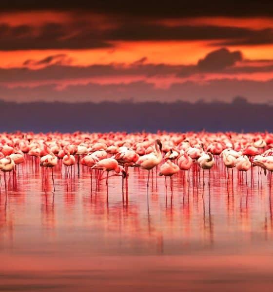 Ría Celestún, un paraíso rosa y rinconcito de Yucatán   El Souvenir