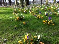 Edinburgh, spring