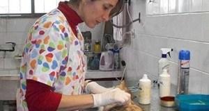 mascotas esterilizacion alto comedero