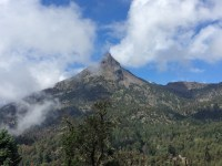 Reforestan parque nacional de Colima