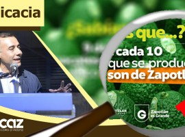"""Esquer: """"9 de cada 10 aguacates jaliscienses son de Zapotlán"""" ¿Es cierto?"""