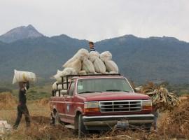 Huacamolli tlen Xalixco: ce cahcayahualiztli -El espejismo del guacamole jalisciense, en náhuatl-