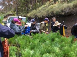 Realizaron jornada de reforestación en El Nevado