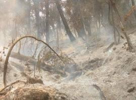 ¿Por qué no deben reforestar aún, las zonas dañadas por incendios?