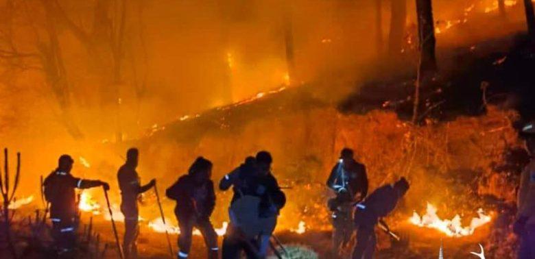 438 hectáreas de bosque consumió incendio en Mazamitla
