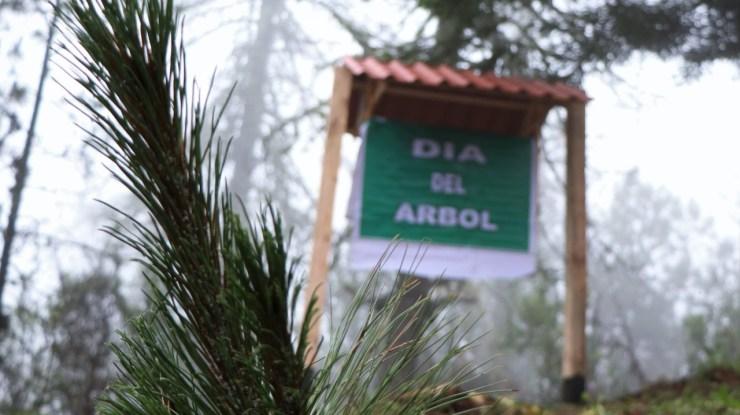 Con reforestación celebran el día del árbol en el Nevado
