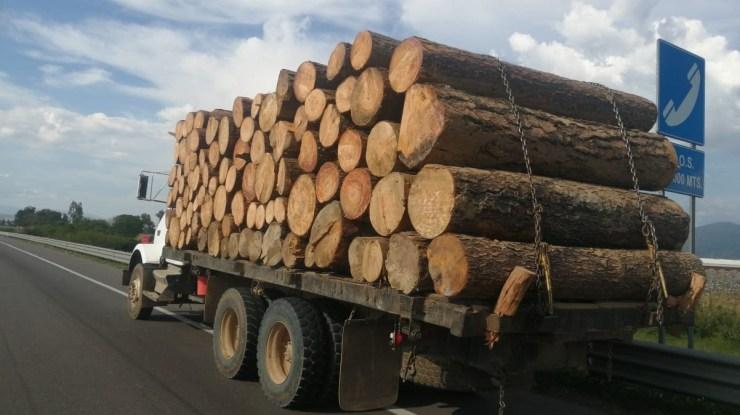 Arrestan a hombre con madera ilegal en Ciudad Guzmán