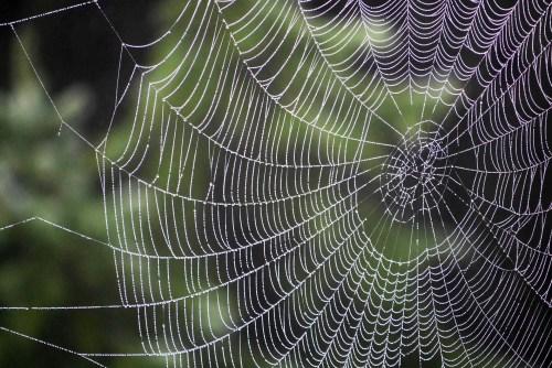 spider-3087185_1920