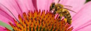 Artenvielfalt - rettet die Bienen